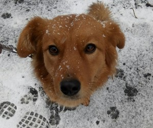 beautyfull, dog, and mypuppy image