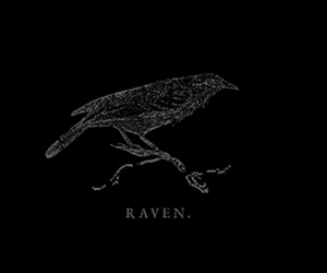 black, raven, and the witch image