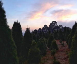 arbol, atardecer, and colores image