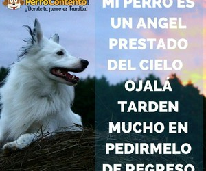 Angeles, frases, and perros image