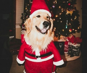puppy, animals, and christmas image