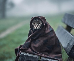 animals, cat, and clothes image