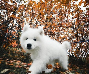 autumn, dog, and puppy image