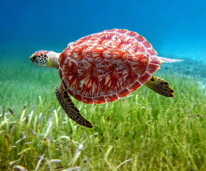 nature, turtle, and snorkeling image