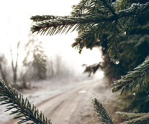 nature, tree, and winter image