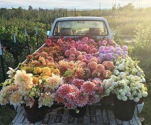 beautiful, flowers, and fumikokawa image