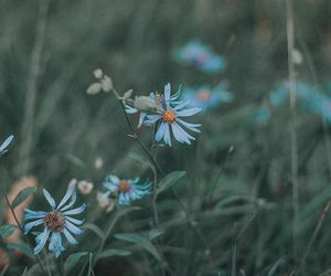 boho, flowers, and indie image