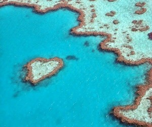 art, nature, and great barrier reef image