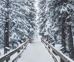 alternative, christmas tree, and snow image