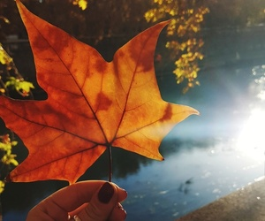 aesthetic, autumn, and flare image