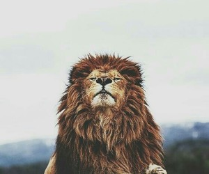 aesthetic and lion image
