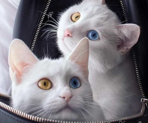 Image by cute cats
