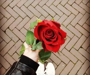 rose, beauty, and red image