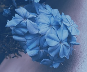 azul, blue, and flores image