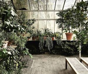 greenhouse image