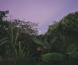 nature, sky, and purple image