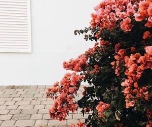 beautiful, tumblr, and flowers image