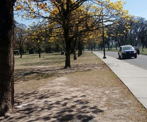 argentina, park, and yellow image