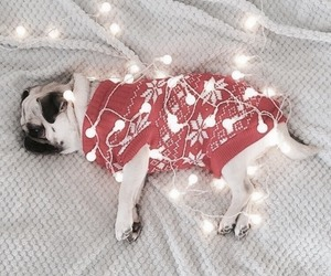 christmas, light, and dog image