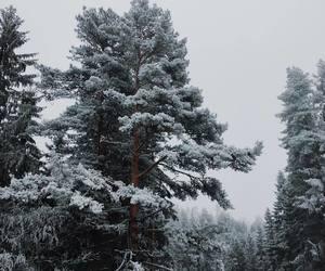 photography, season, and snow image