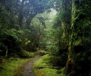 forest, path, and trees image