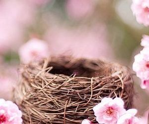 beautiful, cherry blossom, and life image
