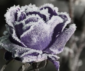 flower, frost, and nature image