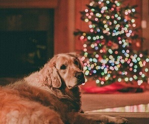 christmas, dog, and lights image
