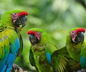 aves, kawaii, and naturaleza image