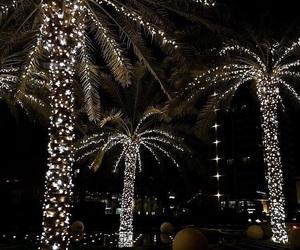 light, night, and palm trees image