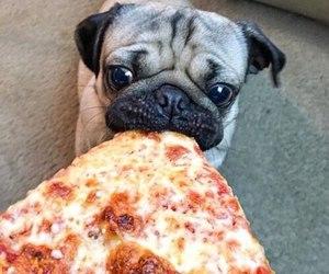 pizza, pug, and dog image