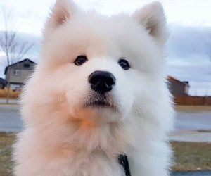 animals, fluffy, and dogs image