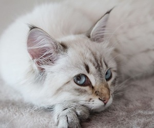 beautiful, chic, and blue eyes image