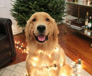 adorable, animals, and lights image