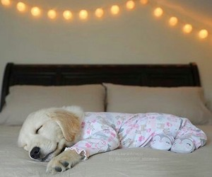 adorable, lights, and puppy image