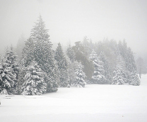 trees, winter, and photography image