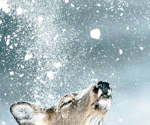 animals, deer, and snowing image