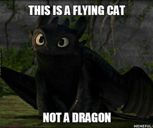 dragon, cat, and toothless image
