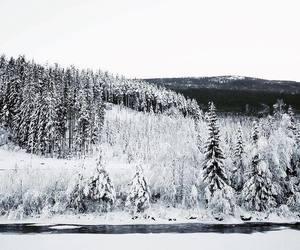amazing, christmas, and nature image