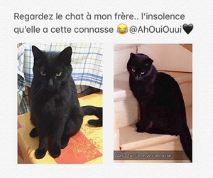 chat, princesse, and reine image