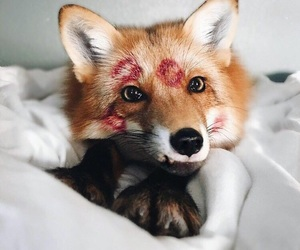 fox, animal, and kiss image