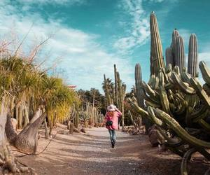 cactus, photogrphy, and travel image