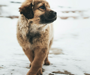 dog, winter, and goals image