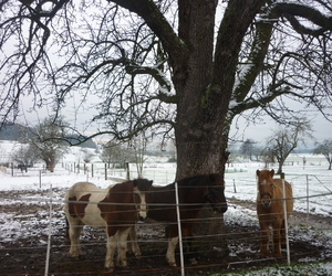 pferde, winter, and schnee image