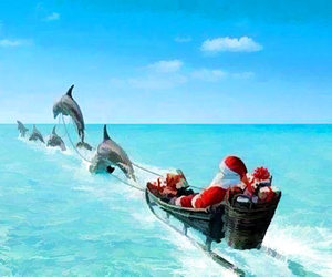 christmas, ocean, and dolphins image