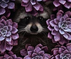 flowers, purple, and raccoon image