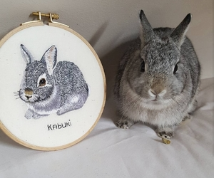 art, bunny, and custom image