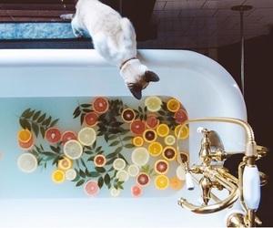cat, bath, and fruit image