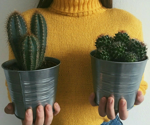 cactus, yellow, and aesthetic image