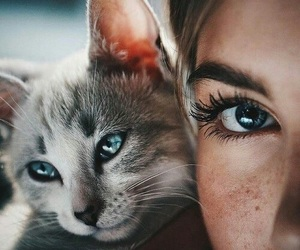 animal, freckles, and kitty image